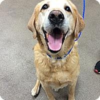Adopt A Pet :: Winston - Cumming, GA