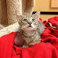 Adopt A Pet :: Refael - Miami, FL