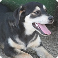 Adopt A Pet :: *Tierra - PENDING - Westport, CT