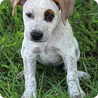 Adopt A Pet :: Pixie - Mount Juliet, TN