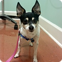 Adopt A Pet :: Mags - Knoxville, TN