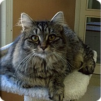 Adopt A Pet :: Cocoa - Medway, MA