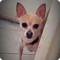Adopt A Pet :: Toco - Brooksville, FL