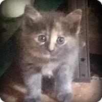 Adopt A Pet :: Blossom - Monroe, NC