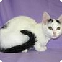 Adopt A Pet :: Eloise - Powell, OH