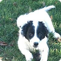 Adopt A Pet :: Panda - Meridian, ID
