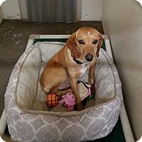Adopt A Pet :: Alpha - Geneseo, IL