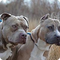 Adopt A Pet :: Boe & Chancr - Ardsley, NY