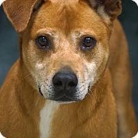 Adopt A Pet :: Butters Rice - Newnan City, GA