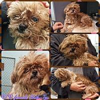 Adopt A Pet :: Pookie - Lansing, MI