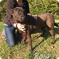 Adopt A Pet :: Rosa - Fayetteville, WV