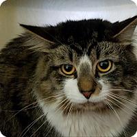 Adopt A Pet :: Bozo - Elyria, OH