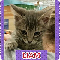 Adopt A Pet :: Liam - Kennedale, TX