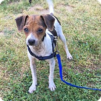 Adopt A Pet :: Bessie - Fresno, CA