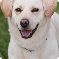 Adopt A Pet :: kricket - Johnson City, TN