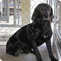 Adopt A Pet :: Aurora - Huntley, IL
