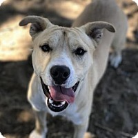 Adopt A Pet :: Winston - The Dalles, OR