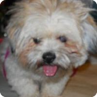 Adopt A Pet :: Zeke - dewey, AZ
