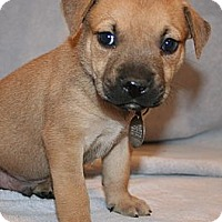 Adopt A Pet :: Owen - Scottsdale, AZ