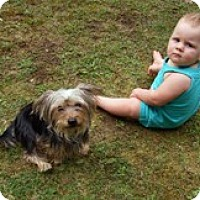 Adopt A Pet :: Rascal - Framingham, MA