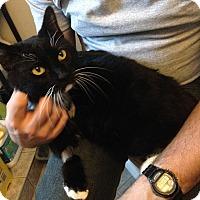 Adopt A Pet :: Avery - St. Louis, MO