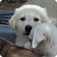 Adopt A Pet :: Frost - Waller, TX