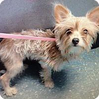 Adopt A Pet :: Bubbles - Orlando, FL