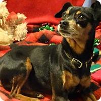Adopt A Pet :: Bugsey - Vacaville, CA