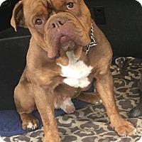 Adopt A Pet :: Mack - Van Nuys, CA
