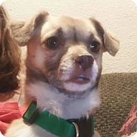 Adopt A Pet :: Goober - Strasburg, CO