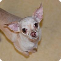 Adopt A Pet :: Georgie - Ogden, UT