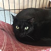 Adopt A Pet :: Amos - Lunenburg, MA