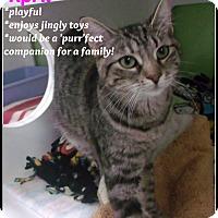 Adopt A Pet :: april - Muskegon, MI