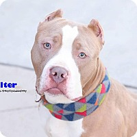 Adopt A Pet :: Walter - Grand Rapids, MI
