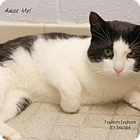 Adopt A Pet :: Foghorn Leghorn - Camden, DE