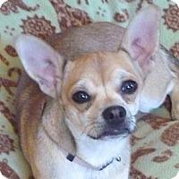 Adopt A Pet :: Bill - YERINGTON, NV
