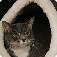 Adopt A Pet :: Maxxie - Chesapeake, VA