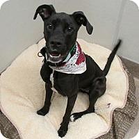 Adopt A Pet :: Miranda - Gilbert, AZ