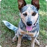 Adopt A Pet :: Blue Bird - Phoenix, AZ