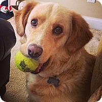 Adopt A Pet :: Dixie - Windam, NH