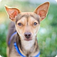 Adopt A Pet :: Mr. Waffles - Mission Viejo, CA