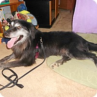 Adopt A Pet :: River - Awesome Personality! - Quentin, PA