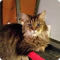 Adopt A Pet :: Olga - Savoy, IL
