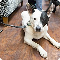 Adopt A Pet :: Petey - Washington, DC