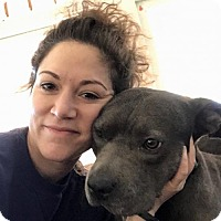 Adopt A Pet :: Harley - Courtesy Post - Northeast, OH