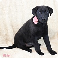 Adopt A Pet :: Winter - Dalton, GA