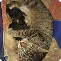 Adopt A Pet :: CLAIRE - Hampton, VA