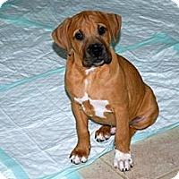 Adopt A Pet :: Ricky - Minneola, FL