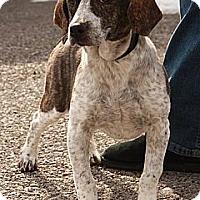 Adopt A Pet :: Peri (CD) - Brattleboro, VT