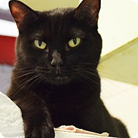 Adopt A Pet :: Twilight - Huntley, IL